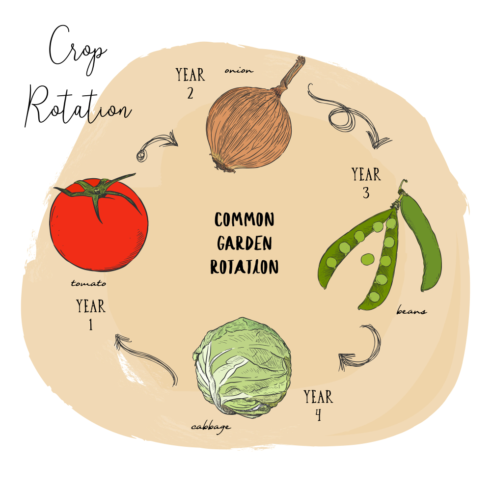 Crop Rotation - Guide (2020)