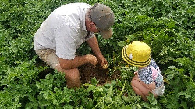 Rotação de colheitas