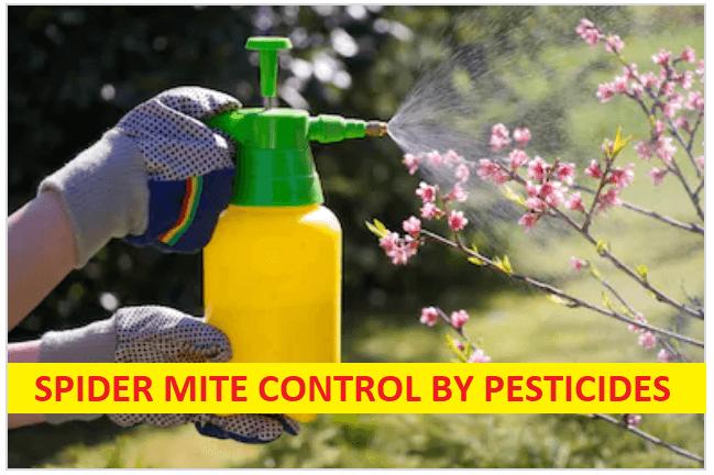 Pesticide for spider mites