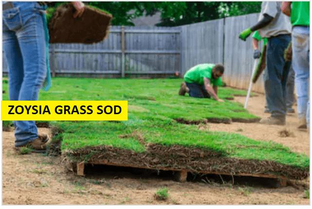 ZOYSIA GRASS SOD
