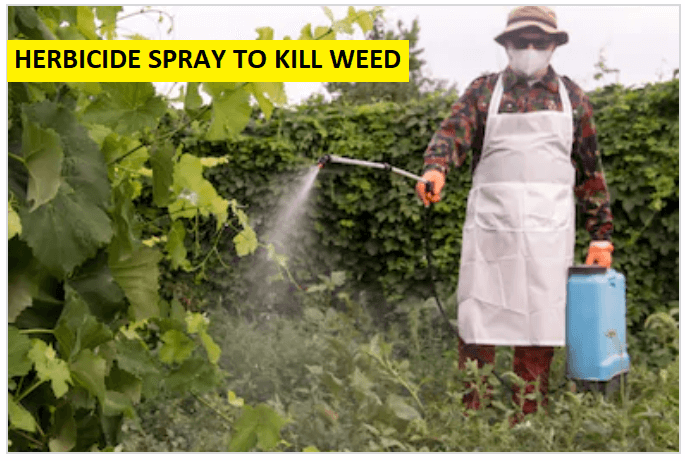 HERBICIDE SPRAY TO KILL WEED