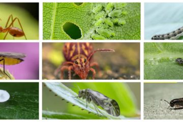 PLANT INSECTS