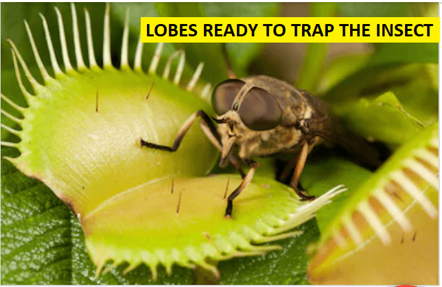 trap the insect