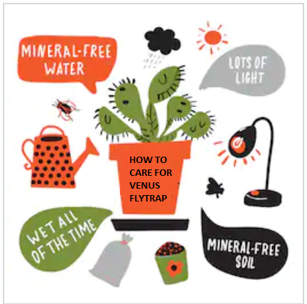 Care For Venus Fly Trap