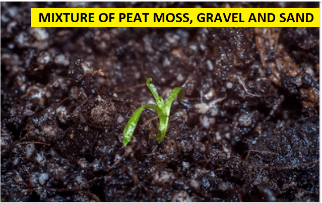 Mixture of Peat Moss, Gravel and Sand