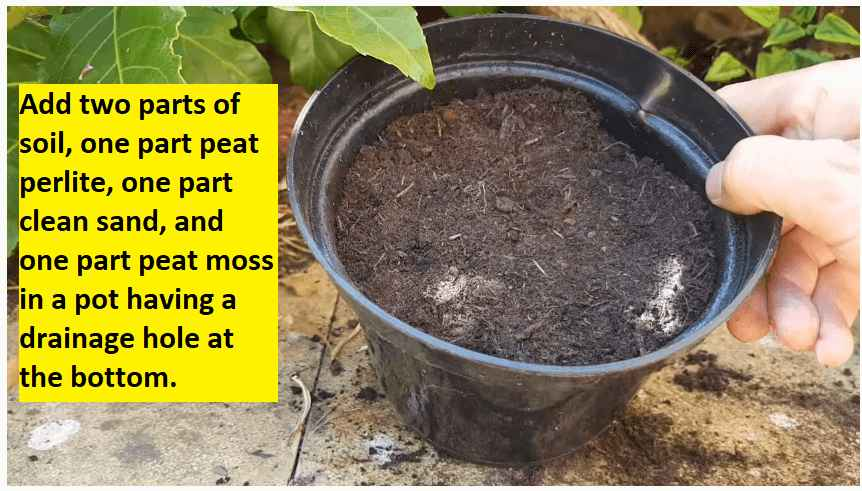 preparing soil for planting euphorbia