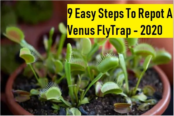 Venus flytrap repotting