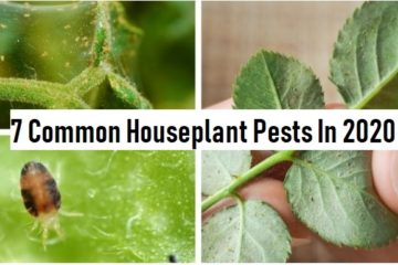 houseplant insects