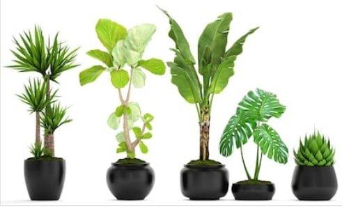 benefits of houseplants