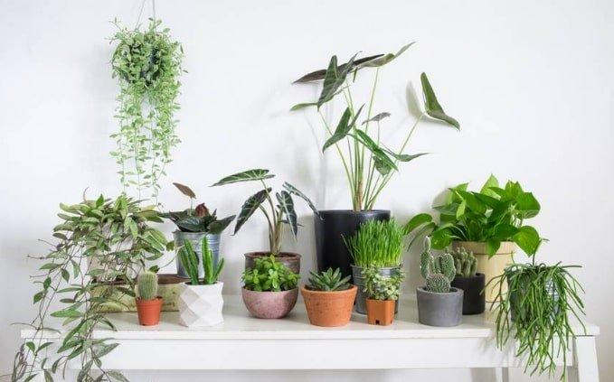 houseplants die