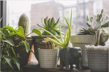 organic houseplants