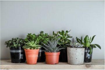 low light house plants